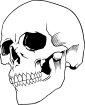 https://images.inksoft.com/images/clipart/thumb/gallery1841/SKULL_3.png