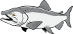 https://images.inksoft.com/images/clipart/thumb/gallery1909/KINGSALMON01NC2CLR_(CONVERTED).EPS.png