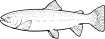 https://images.inksoft.com/images/clipart/thumb/gallery1909/RAINBOWTROUT01NC2BW.EPS.png