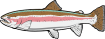 https://images.inksoft.com/images/clipart/thumb/gallery1909/RAINBOWTROUT01NC2CLR.EPS.png